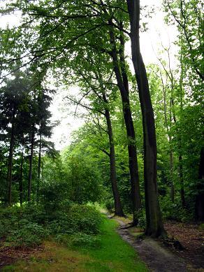 Jahrunderte altes Wegenetz in der Sächsischen Schweiz